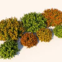 Plant Nandina Bush