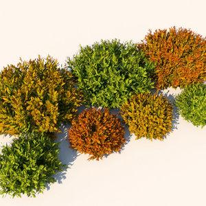 nandina bushes plants 3d model