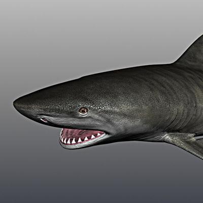 tiger shark 3ds