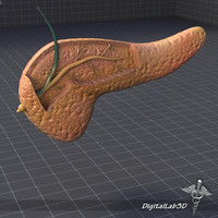 3ds max pancreas medical gland