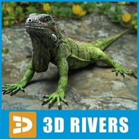 lizards iguania iguanas 3d model