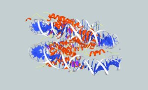 dna nucleosome 3d x