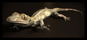 house lizard gecko 3d model