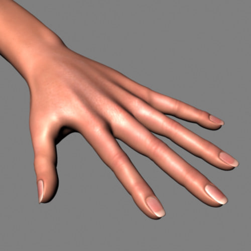 female hand arm 3d model
