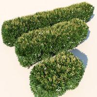 Plant Flowering Hedge