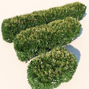 hedge flowers 3d model