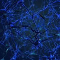 neurons animation 3d model