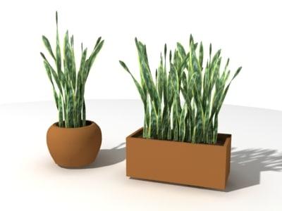 sansevieria trifasciata pot plants 3d max