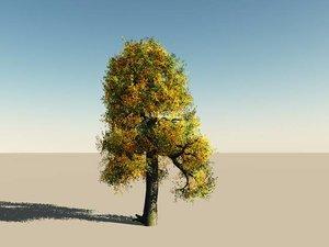 vue tree autumn