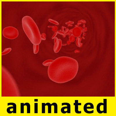 3d model blood cells