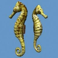 hippocampus max