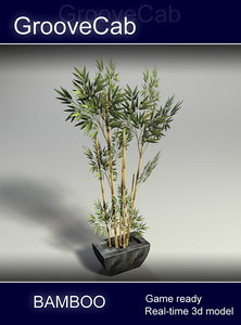 3d bamboo shrub real model