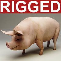 Pig Rigged