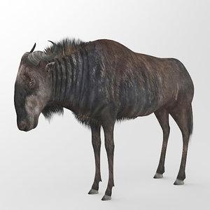 3d wildebeest