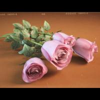 realistic roses 3d model