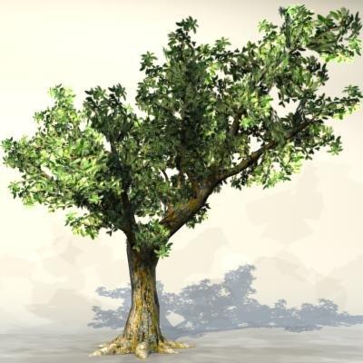 max pc tree