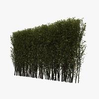 hedge 3d max