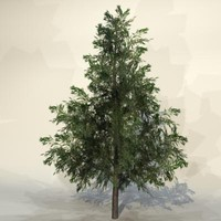 Tree_n_018.zip