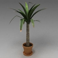 3d small yucca palm model