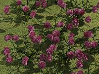 flower clover 3d model