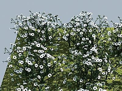3d flower daisy model