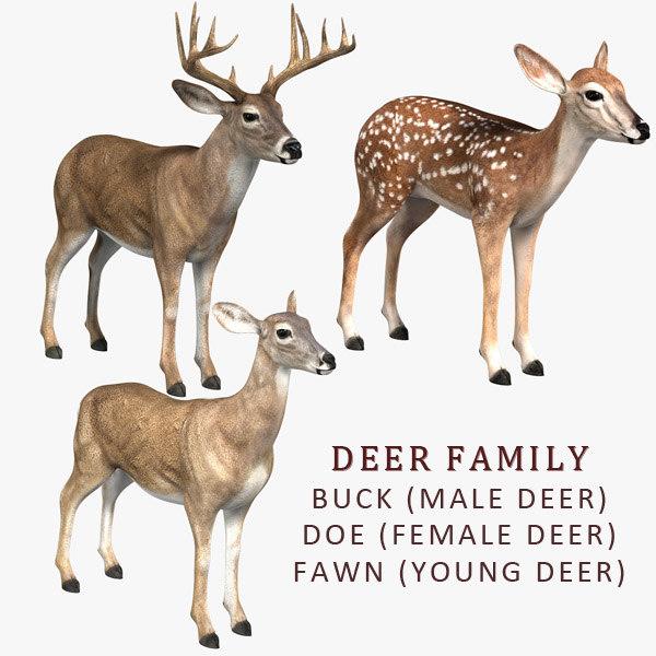 deer family doe fawn 3d model