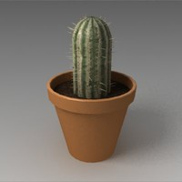 Cactus in pot
