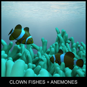 clown fishes anemones 3d model