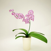 3d orchidea model