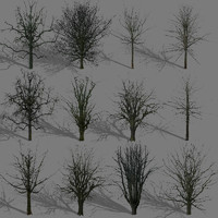 winter trees 3d model