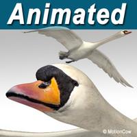 Swan ( Flying )