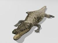 max crocodile croc