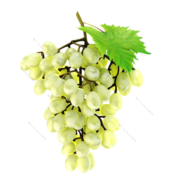 realistic grapes white 3d model