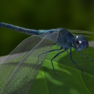 realistic dragonfly 3d model