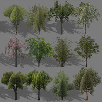 autumn trees 3d max