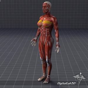 female muscular 3d max