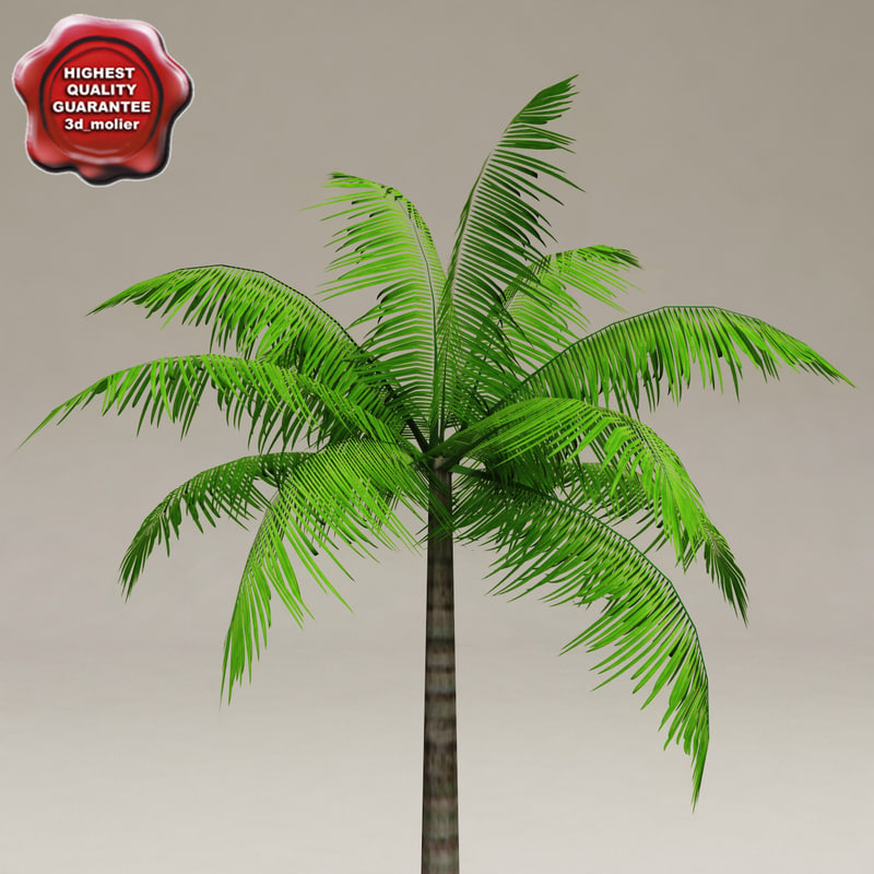 palm v1 3d obj