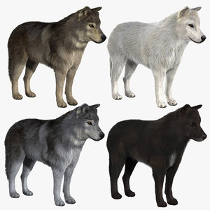 3d wolves 2 wolf model