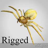 animation spider rigged max