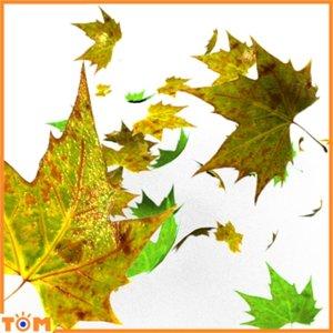 fall leaves leaf 3d blend