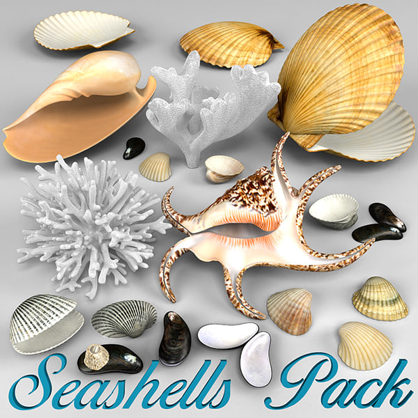seashells corals 3d model