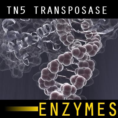 3d model of enzyme transposase tn5