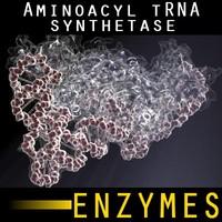 Aminoacyl tRNA synthetase