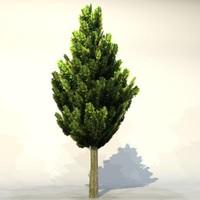 Tree_010.zip