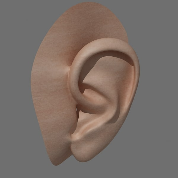 3ds max realistic ear head