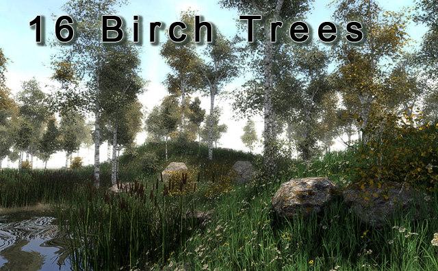 3d asset 16 birches trees
