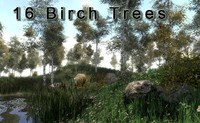 16 Birch Trees