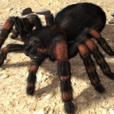mexican redknee tarantula 3d model