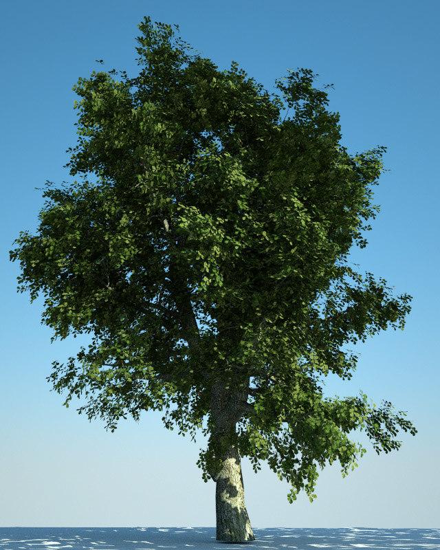 3d european oak model