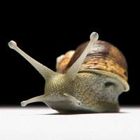 3ds garden snail shell